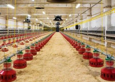 Varmestyring og ventilation i kyllingestald